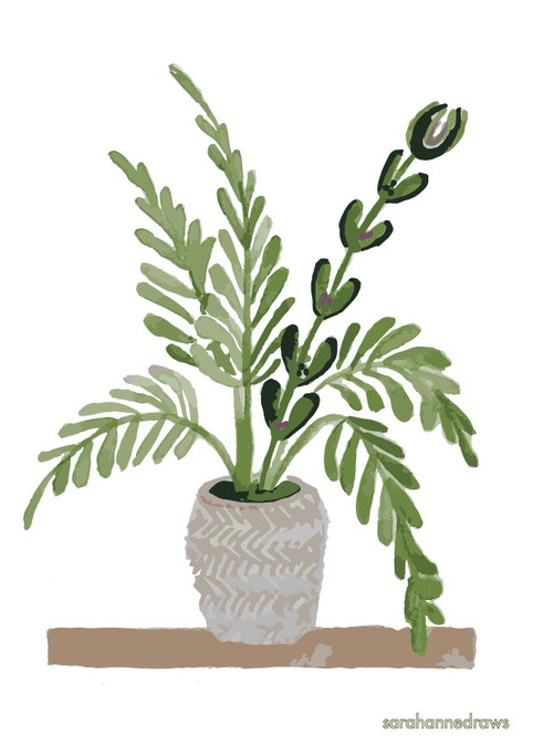 Natural home - Floor plant