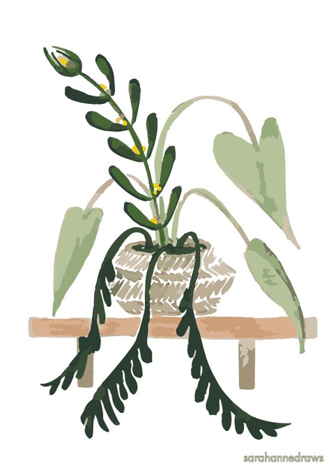 Natural home - Plant on shelf