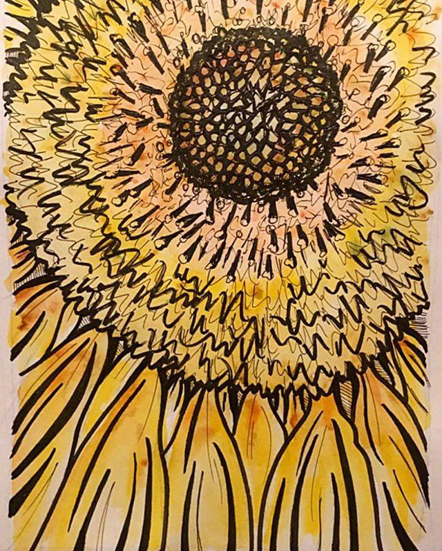 Sunflower, close up
