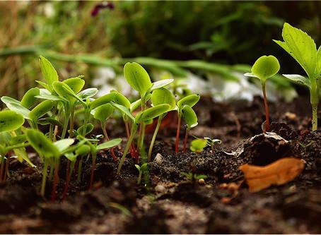 Soirée alimentation locale et Permaculture
