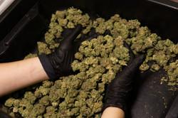 Packaging Bond Road Cannabis