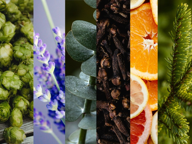 Cannabis terpenes images of plants, herbs and fruits that have the same aromas