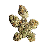 CANNABIOTIX PURPLE PUNCH PLANT PROSE PRO