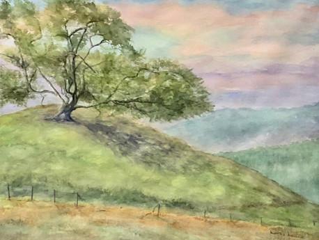 Oak Tree At Dawn
