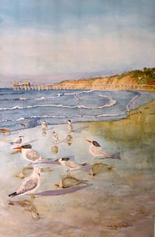 Shorebirds at Scripps Pier