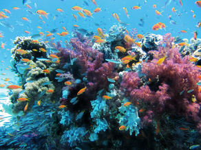 Corais: o que são e qual a sua importância para a biodiversidade marinha?