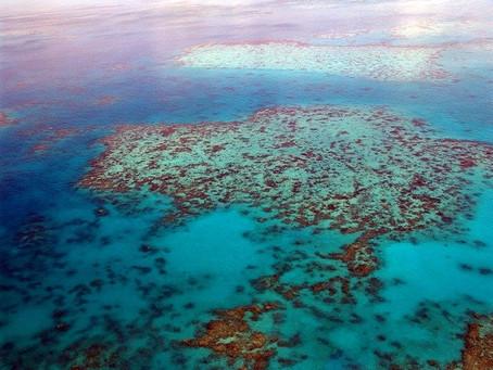 Acidificação dos Oceanos: o que isso significa?