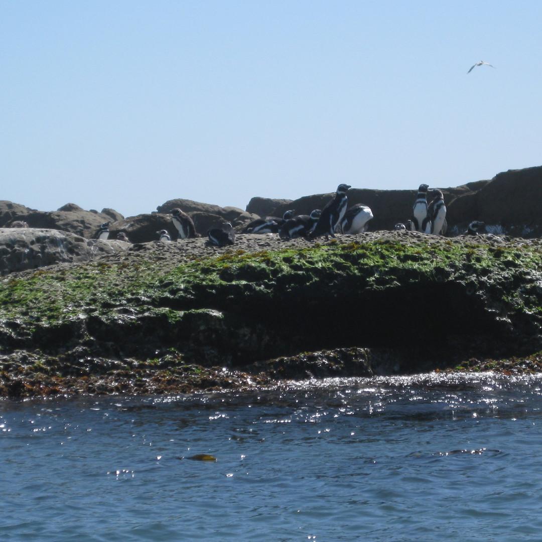 Estudios Fauna Marina