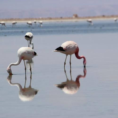 Censos de avifauna