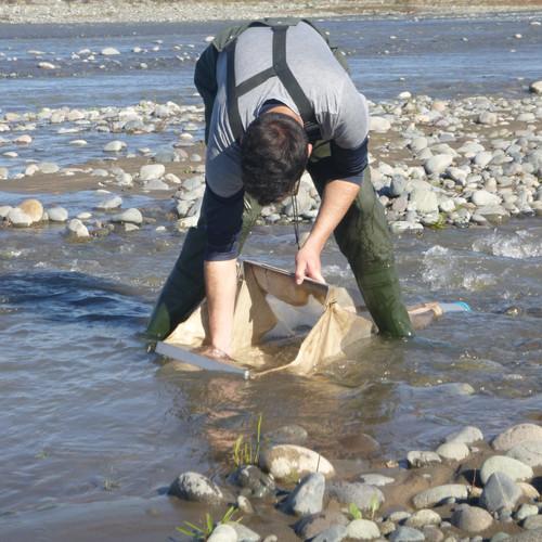Limnología Río Cachapoal