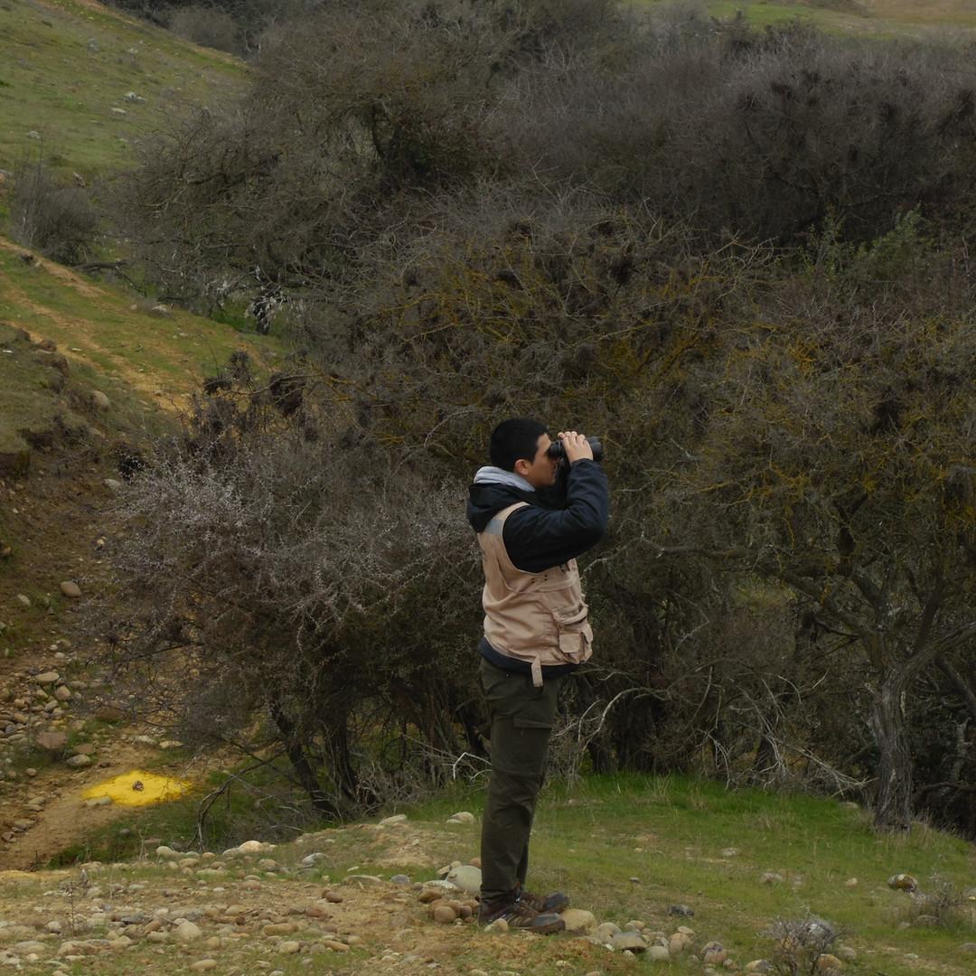 Observación Aves