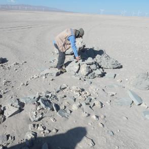 Estudio Fauna y Arqueología