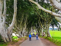 The Dark Hedges - the kings road, game of thrones