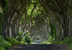 Dark Hedges, County Antrim.jpg