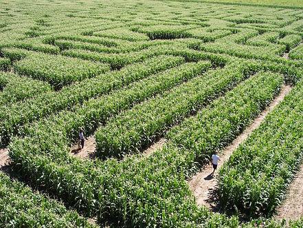 Corn Maze .jpg