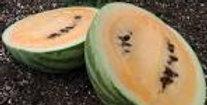 Melon - price per plant!