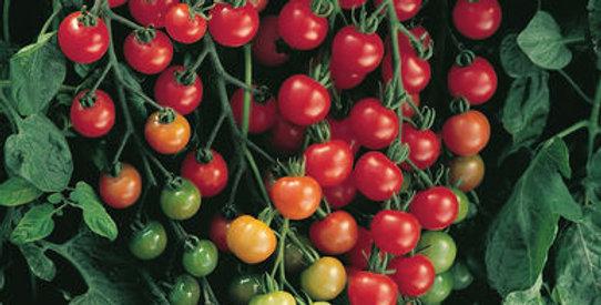 Cherry Tomatoes: 4 Varieties