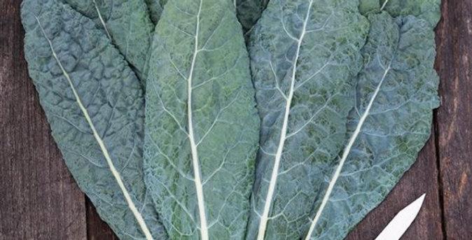 Kale: 3 Varieties
