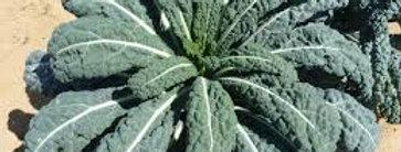 Kale- price per plant!