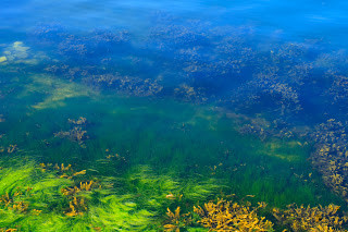 Algae Comes and Goes As Part Of A Lake Cycle