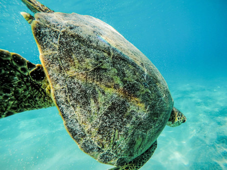 Hawaii: Is Oahu the adventure for you?