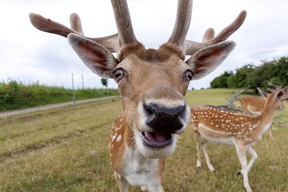 Funny-Deer