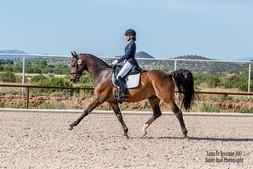 Daniel Quat Photography - equestrian