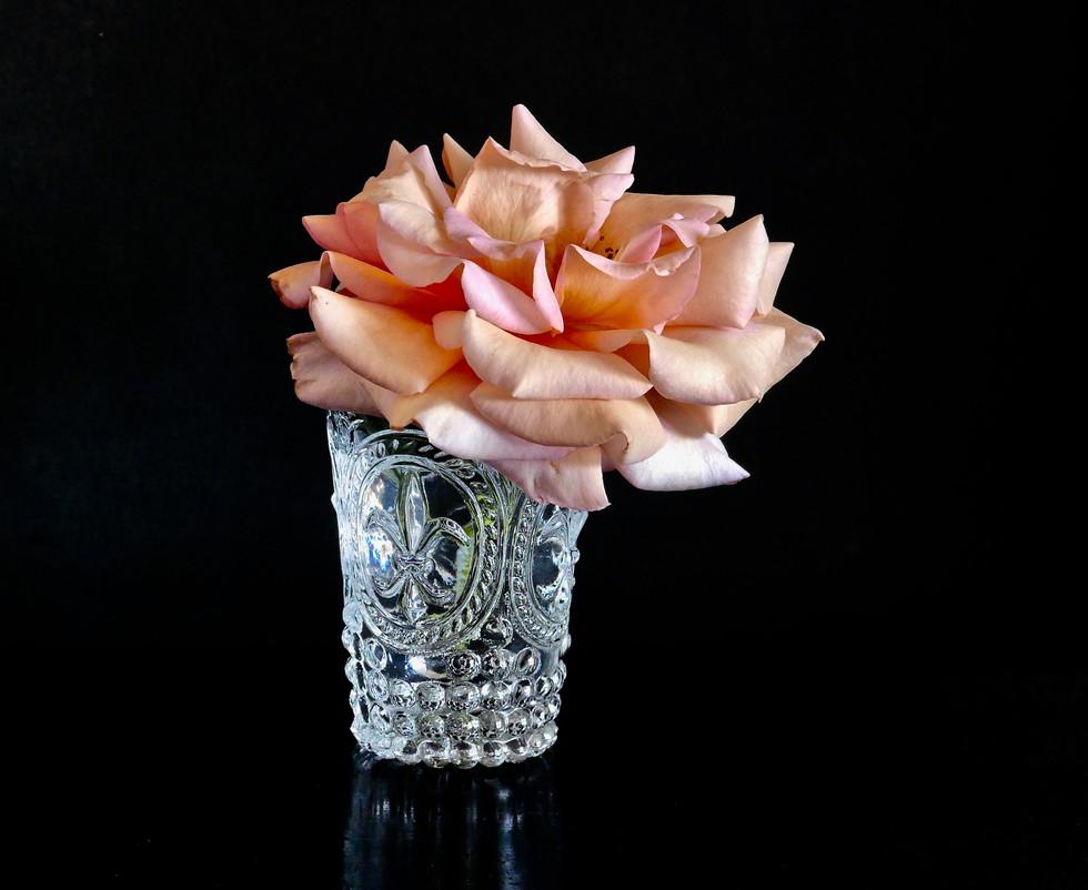 Robin's Rose 1