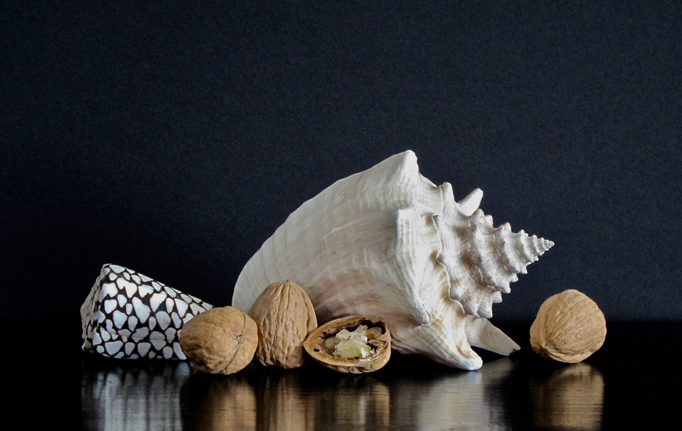 White Shell Walnuts East