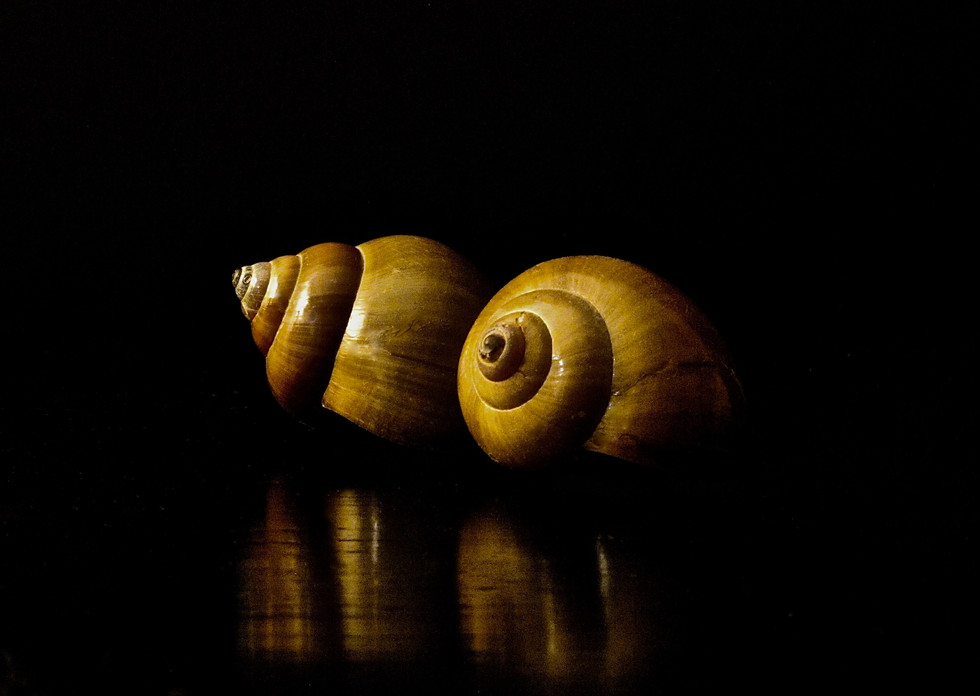 Pair of Shells