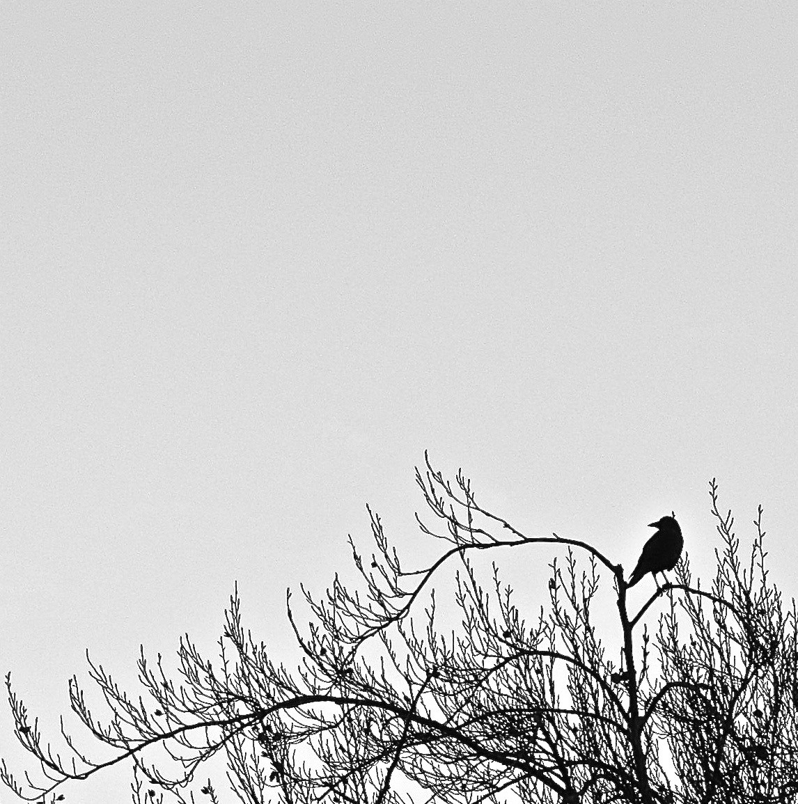 Bird In Tree 2