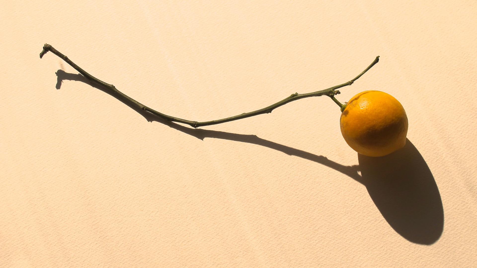 Lemon Twig