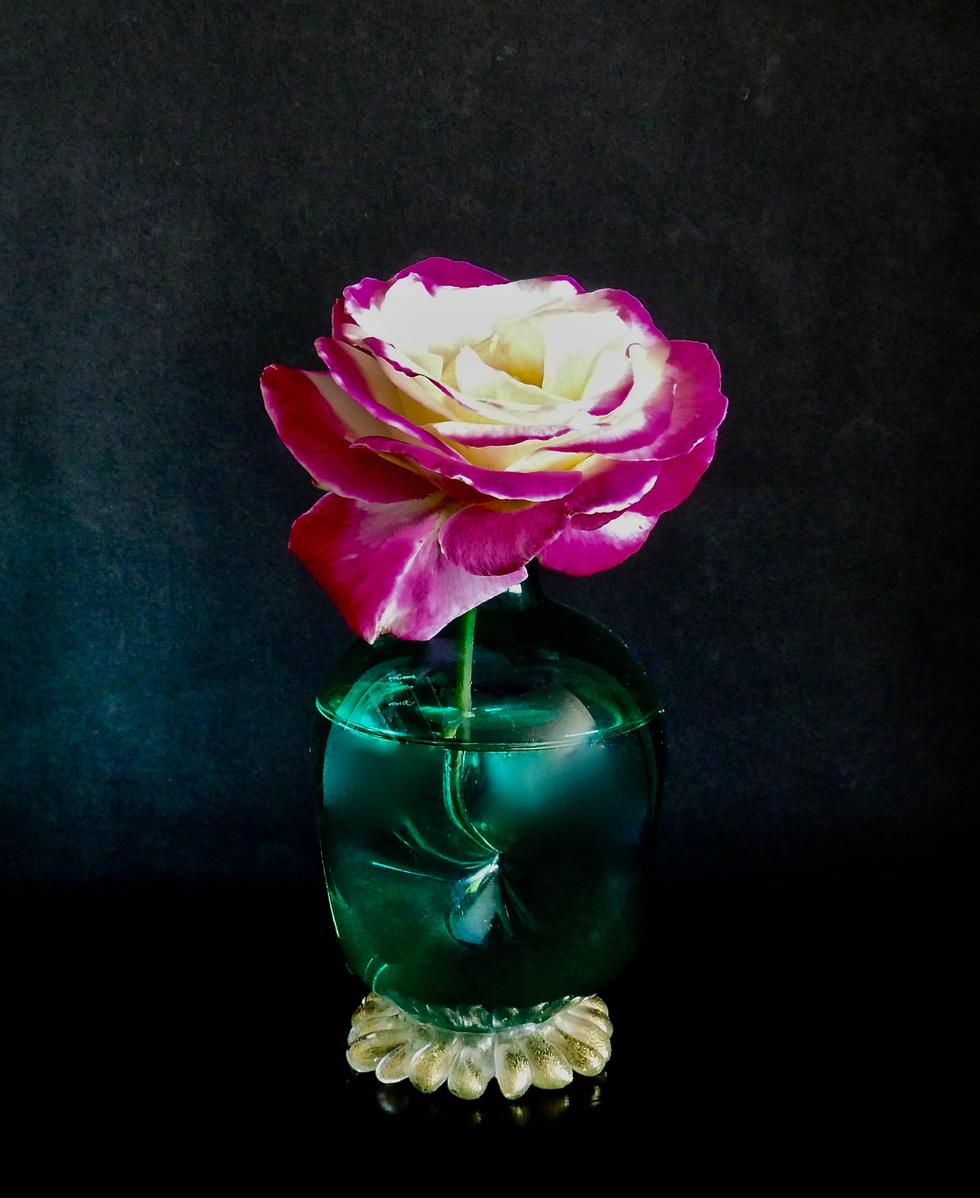 Robin's Rose 2