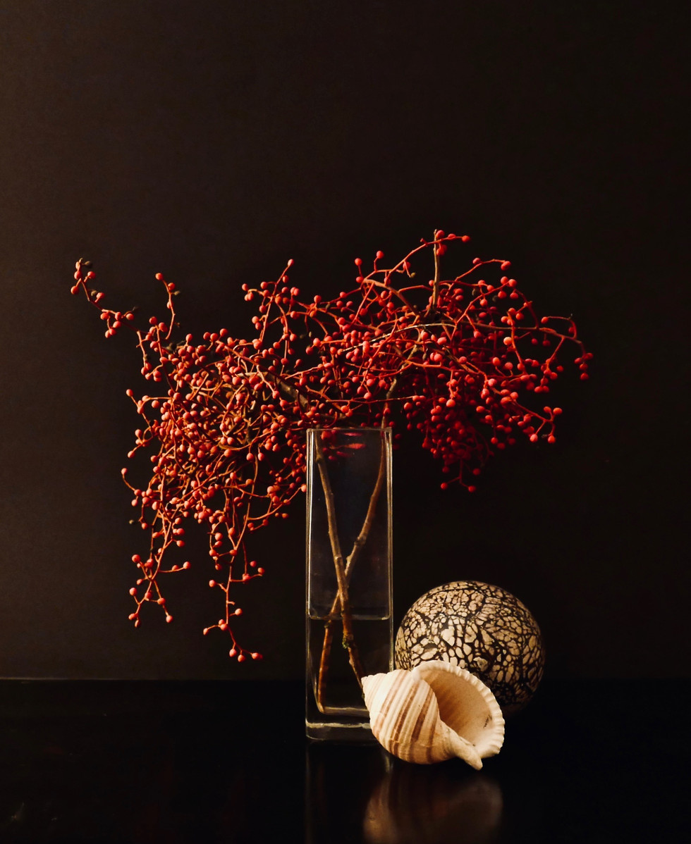 Chinese Pistache Tree Berries,Shell, Ball