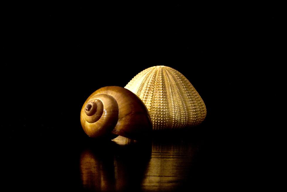 Still Life Shell & Anemone