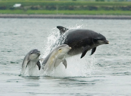 Whales and Dolphins - Spey Bay Conservation