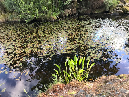 Solstice Evening Walk at Burgie Arboretum