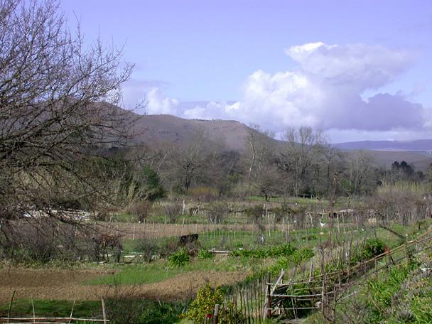 garden allotments