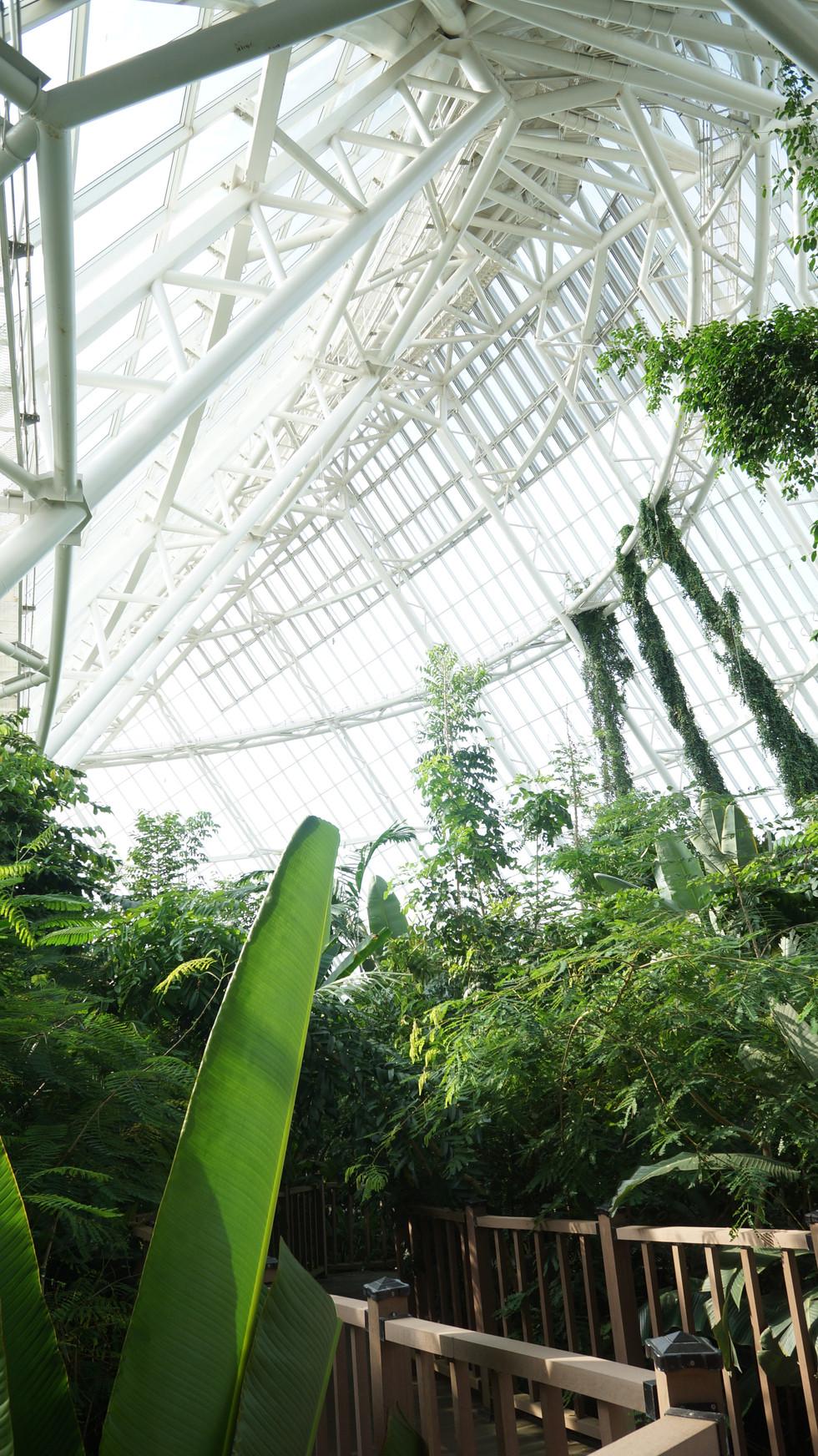Ecorium