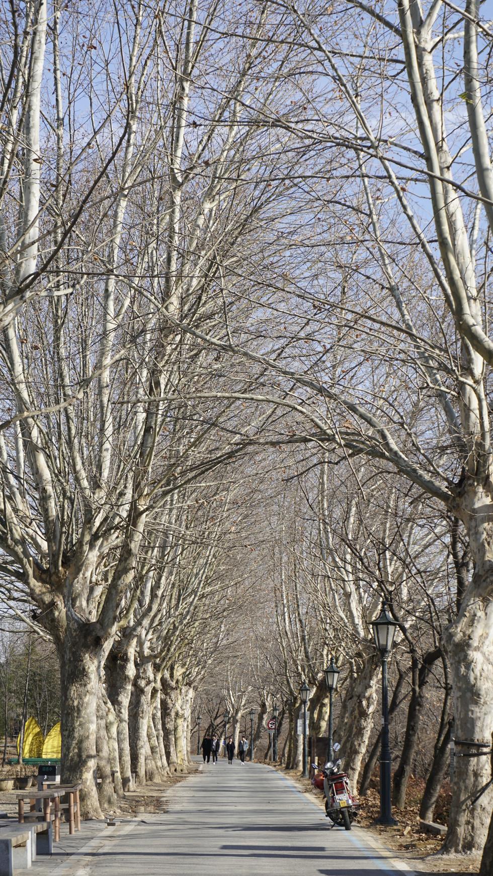 Jucklimwon(bamboo forest garden)