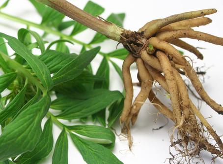 Herbs for Restful Sleep