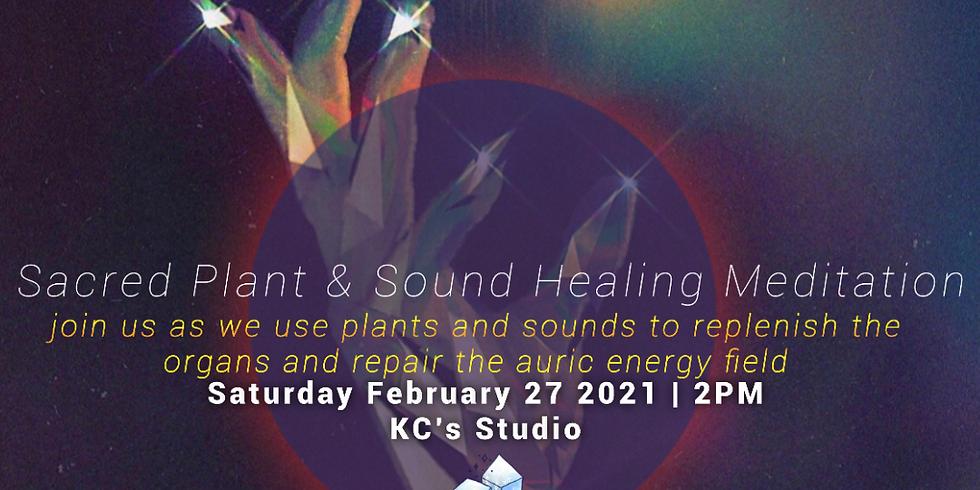 Sacred Plant & Sound Healing Meditation