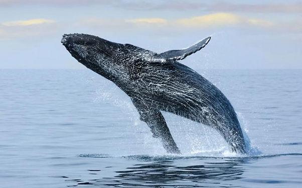 act-obs-baleias-1000x623.jpg