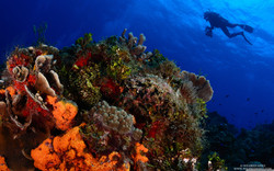 scuba_diving-wallpaper-3840x2400