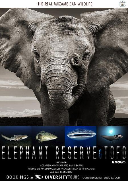 ELEPHANTRESERVE.jpg