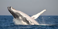 51-port-st-johns-activities-whale.jpg