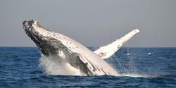 51-port-st-johns-activities-whale