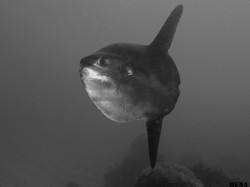 baleeira_dia_dos_golfinhos_013