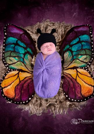 butterflyx.jpg