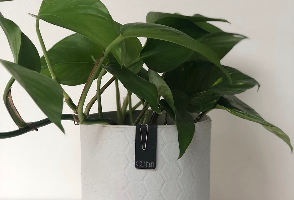 Pothos Plant in a Small, Grey Handmade Oohh Pot by Lubech Living